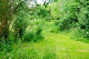 paths through the meadow