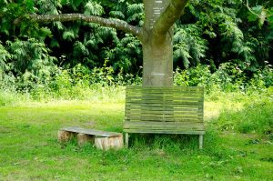 Bench in Wild flower meadow for your pleasure