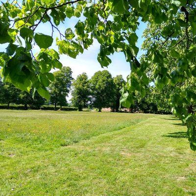 Village green space
